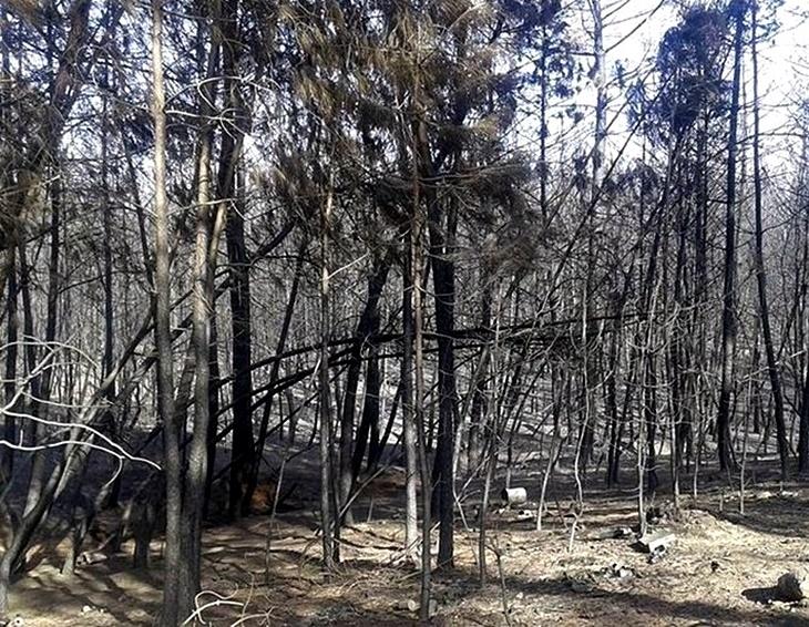 El programa Plantabosques actuará en zonas afectadas por el incendio de Gata