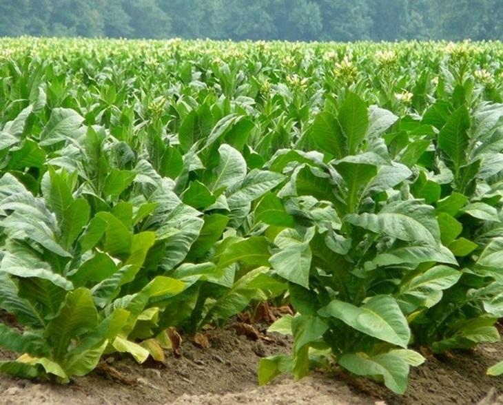 La Junta abona 12 millones para ayudas agroambientales
