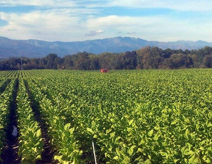 La Junta destina 38 millones para jóvenes agricultores y modernización del sector