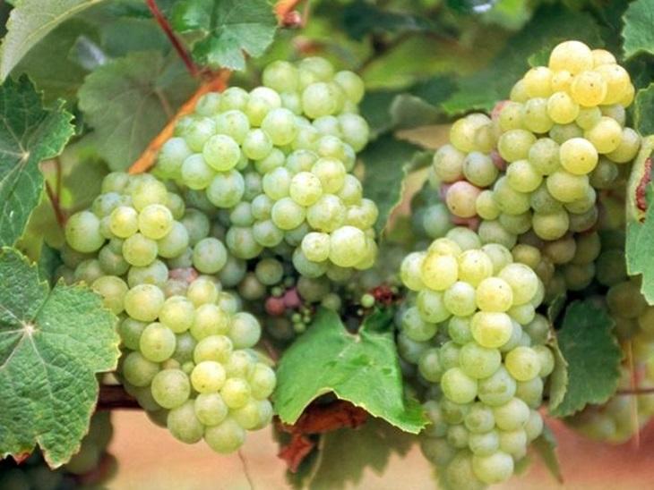 Vectalia repartirá bolsitas de uvas entre todos sus usuarios con motivo de la Nochevieja