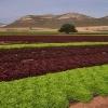 Un paso más en el proyecto del Regadío Tierra de Barros