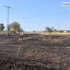 Imágenes del incendio cerca de Mérida