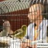 Acto de Enjuiciamiento de la 1ª Feria Ornitológica de Alburquerque