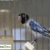 Ambiente del primer Campeonato Ornitológico del oeste en Alburquerque