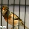 Ambiente en el primer Campeonato Ornitológico del oeste en Alburquerque
