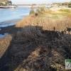 El río Guadiana se vacía para facilitar la limpieza de camalote