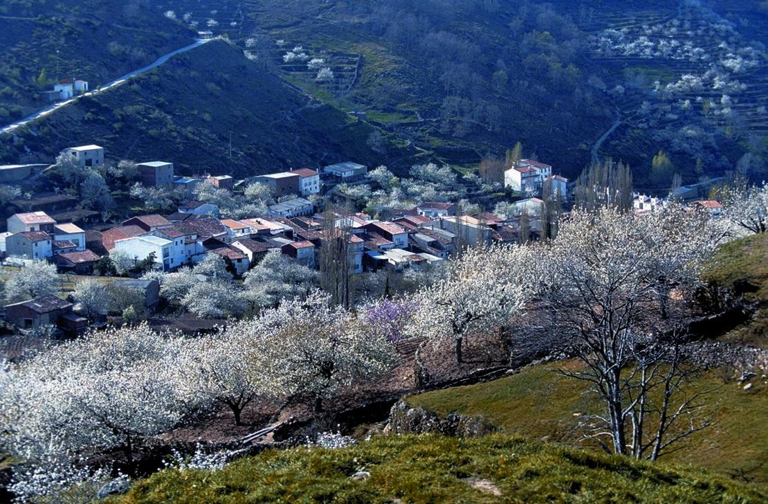 La ONCE elige el Valle del Jerte para ilustrar sus cupones