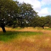"""UPA reclama un seguro que reconozca la """"sequía real"""" que vive la ganadería"""