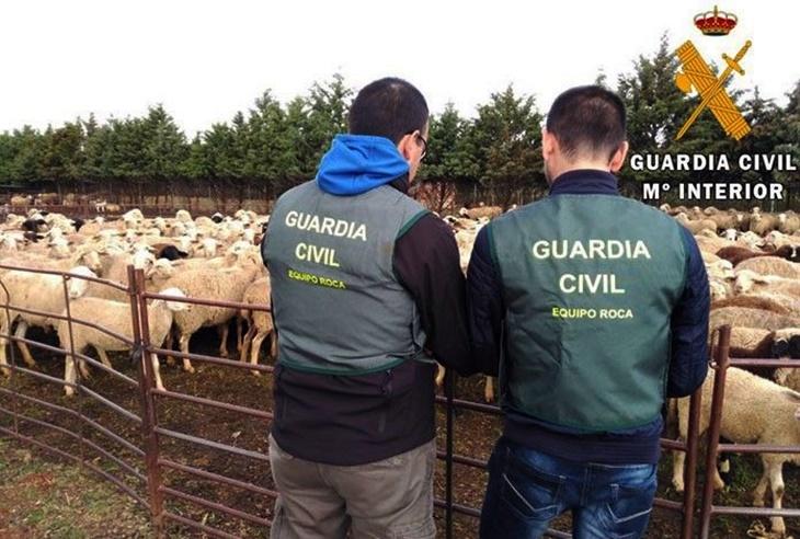 Dos detenidos por ocho delitos de hurto de ganado