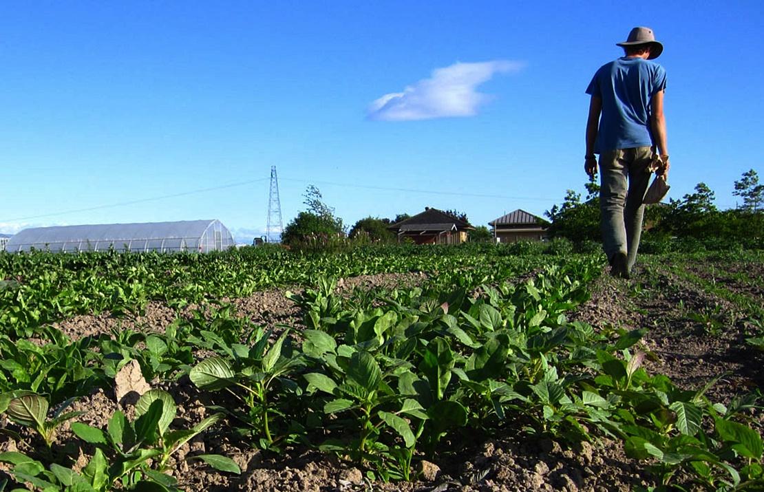 Luz verde a las ayudas para explotaciones agroganaderas afectadas por lluvias o tuberculosis