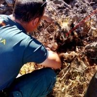 Operación contra el uso de artes prohibidas para la caza