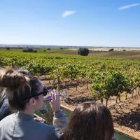 Gran momento para los vinos D.O. Ribera del Guadiana