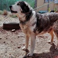 Diputación activa la página web para la adopción de perros abandonados