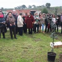 La Fiesta del Árbol de Villanueva de la Sierra ya es Bien de Interés Cultural