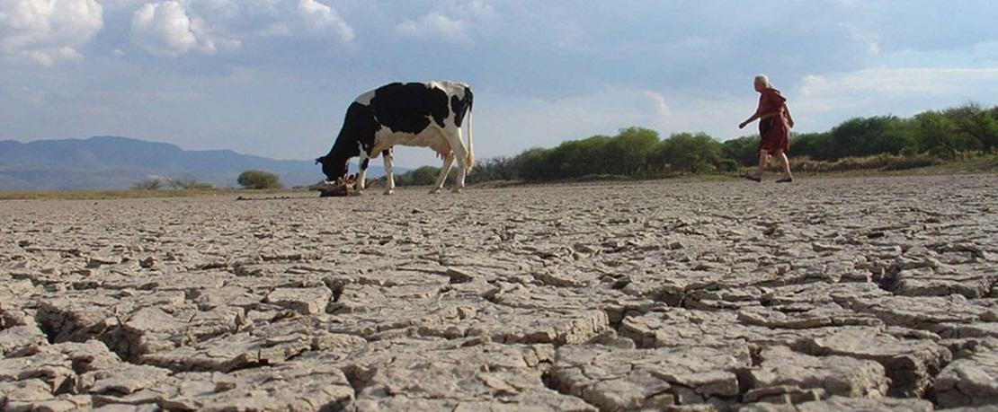 """""""Las ayudas de la Junta a la sequía serán abonadas dentro de 2 años"""""""