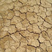 """La Junta propone a los agricultores ayudas """"más accesibles"""" para paliar la sequía"""