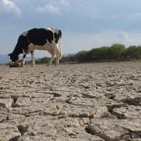 """La Unión: """"La sequía en el campo extremeño tendrá que esperar"""""""