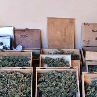 Detenido un vecino de Badajoz por cultivar marihuana en su domicilio
