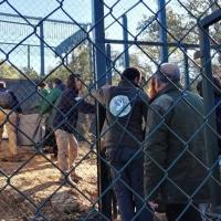 Cinco parejas de linces crían actualmente en Extremadura