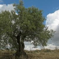 Medio Ambiente aprueba la declaración ambiental para la Zona Regable de Tierra de Barros