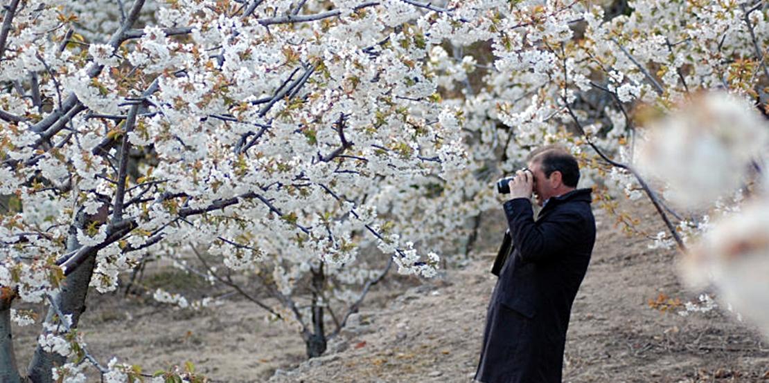 Los cerezos en flor, la primavera más bonita