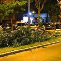 Cáceres y Badajoz cierran sus parques hasta que pase Gisele