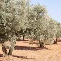 Aprobada la puesta en regadío de 1.200 hectáreas de cultivos leñosos