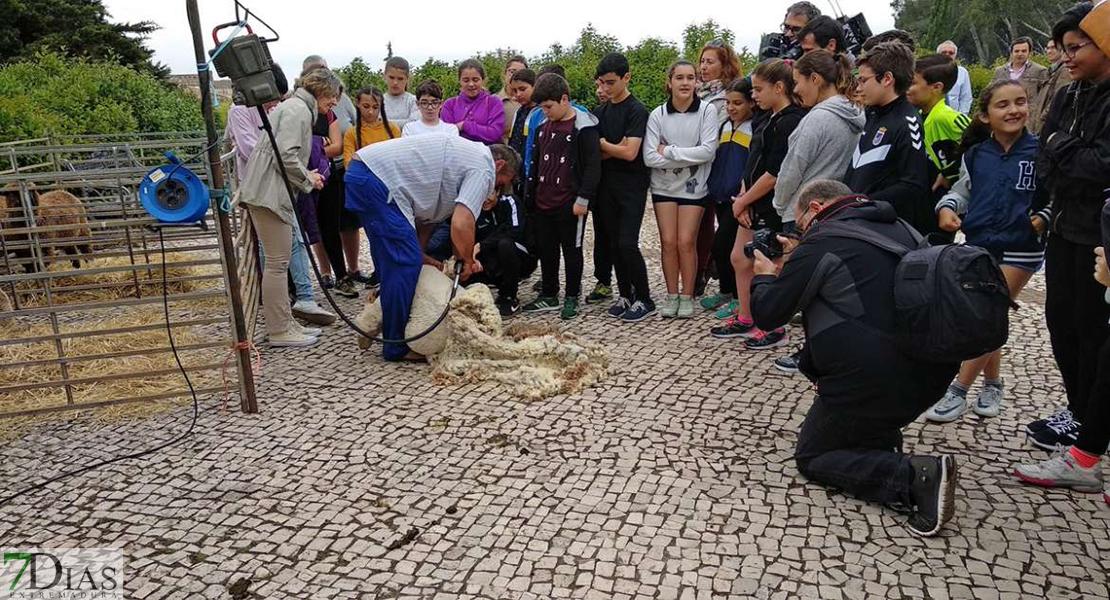 Día de esquileo en el Museo Arqueológico