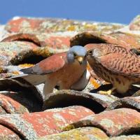 Cita con la ornitología este fin de semana en Trujillo