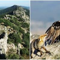 Monfragüe celebra el Día Mundial de las Aves Migratorias
