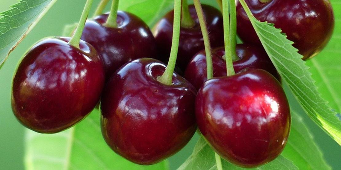 Lo que está ocurriendo con la cereza del Jerte
