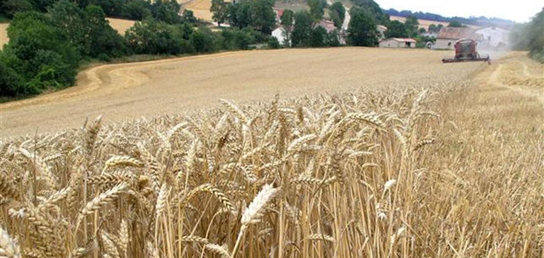Mal año para el cereal de invierno en Extremadura, según APAG
