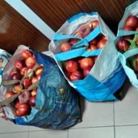 Dos vecinos de Badajoz, detenidos con 100 kilogramos de fruta robada