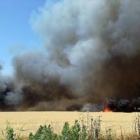 Arden 14 hectáreas de trigo en Guadiana del Caudillo (Badajoz)