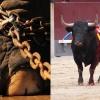 Montijo prohíbe la instalación de circos con animales y no subvencionará espectáculos taurinos