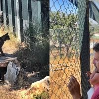 El Centro 'Los Hornos' permite visitar dos linces acogidos en Sierra de Fuentes