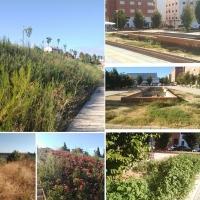 Ramírez de la Merced deja el Servicio de Parques de Badajoz en una situación límite