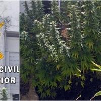 La Guardia Civil desmantela un 'fumadero' de marihuana en Villar del Rey