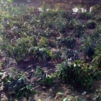 UPA-UCE reclama agilidad en la peritación de los daños causados por las tormentas