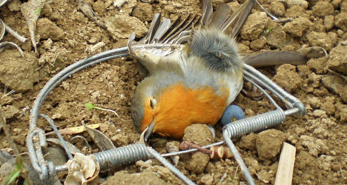 Proyecto pionero para reducir la mortalidad en la fauna por actos delictivos