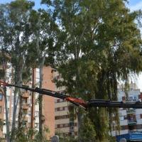 Asalto a la plaza de Santa Marta para intentar parar la tala de los eucaliptos