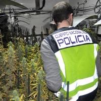 Mérida: La Policía detiene a cuatro personas por cultivar marihuana