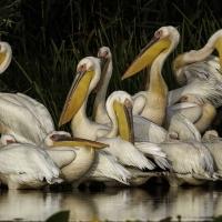 El concurso fotográfico de la FIO desvela sus obras finalistas