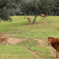 UPA pide la actuación del seguro de sequía en pastos ante la escasez de lluvias