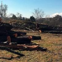 La Junta autorizó la tala de árboles centenarios en las riberas del Jerte y del Alagón