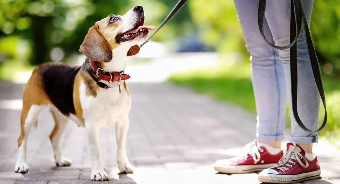 Autoridades pacenses colaborarán para acabar con la problemática de los canes abandonados