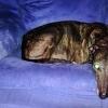 Adopta un perro que deambulaba por la ciudad tras ser abandonado por su propietario