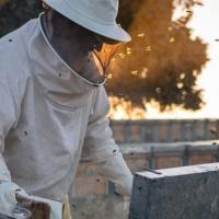 UPA alerta de los efectos del cambio climático en la apicultura