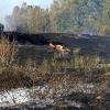 Incendio forestal en Balboa (Badajoz)