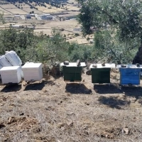 Detenidos por robar 70 colmenas en Peñalsordo (BA)
